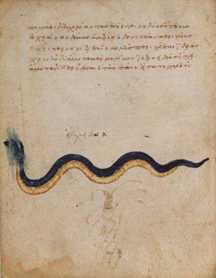 Nicandre, Theriaka, Istanbul, Xe siècle, BNF ms. suppl. gr. 247, f.9v, vipère